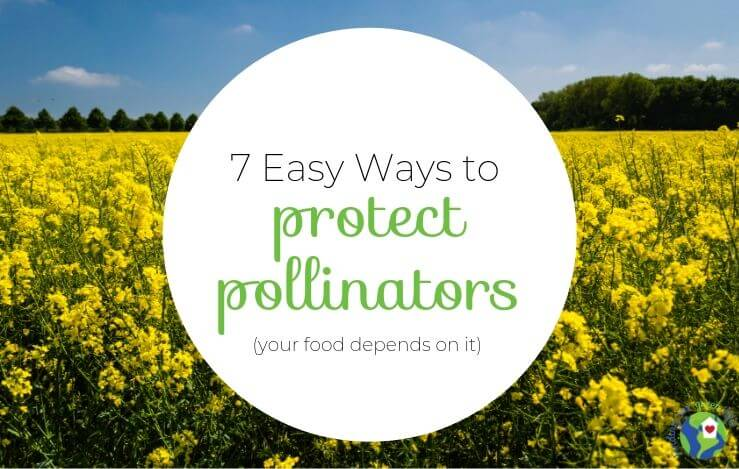 7 Ways You Can Help the Declining Bee Population