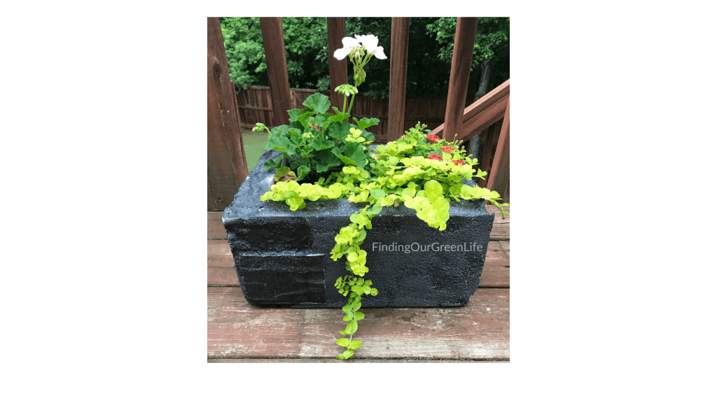 styrofoam container with plants inside